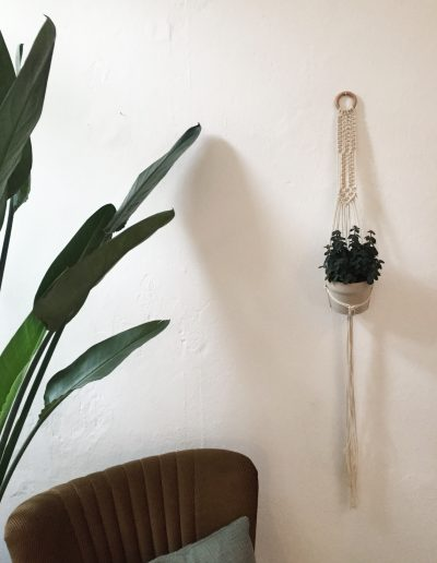 Wallplanter & Plant